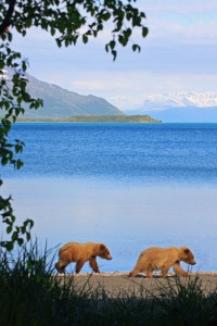 Katmai, AK (Photo: Felix Pretis)