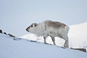 Svalbard (Photo: Felix Pretis)